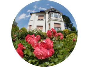 Smartphone Fisheye Fotografie - Blumen